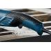 Угловая Шлифмашина Bosch GWS 15-125 CITH